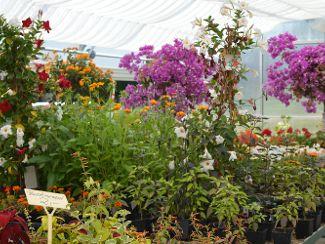 Unsere Gärtnerei hat geöffnet